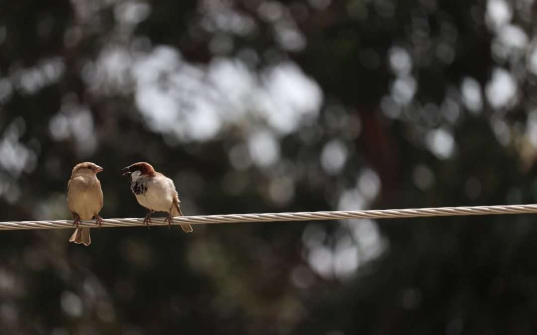 image of two birds on a wire